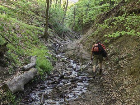 Între Buciumi și Stârciu, una dintre cele mai frumoase zone peisagistice din Sălaj. Pădurea Verde