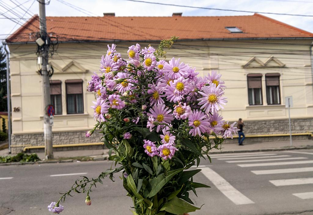 Flori de trei lei
