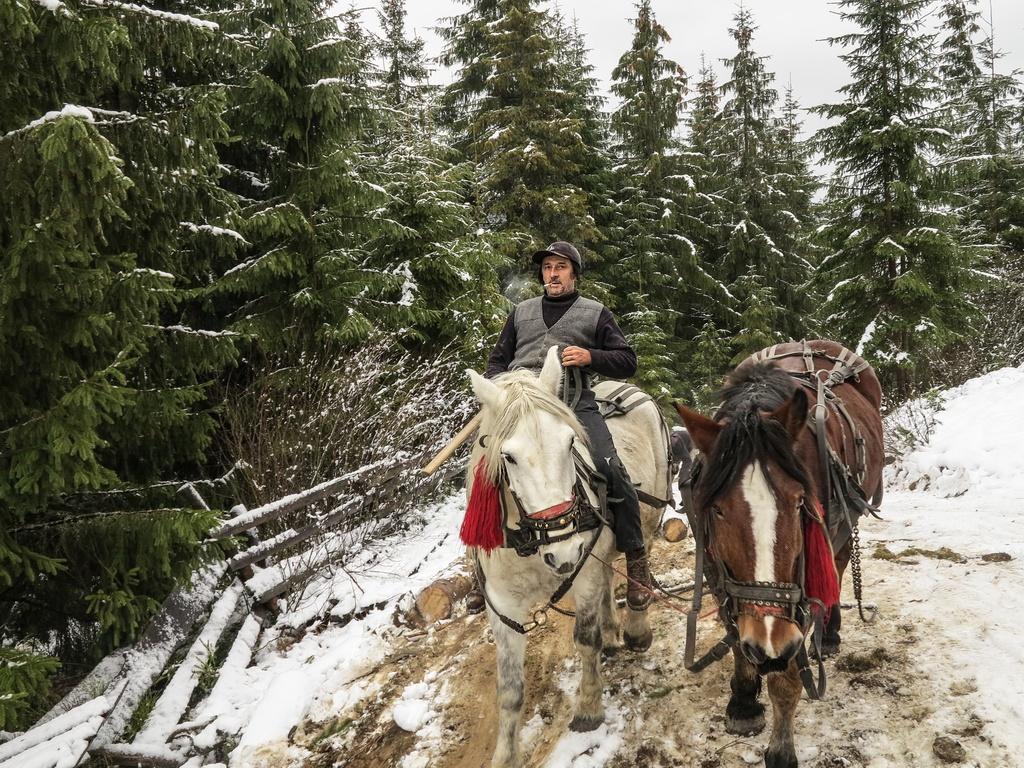 Iarna la munte, cu Voicu și Șoimu