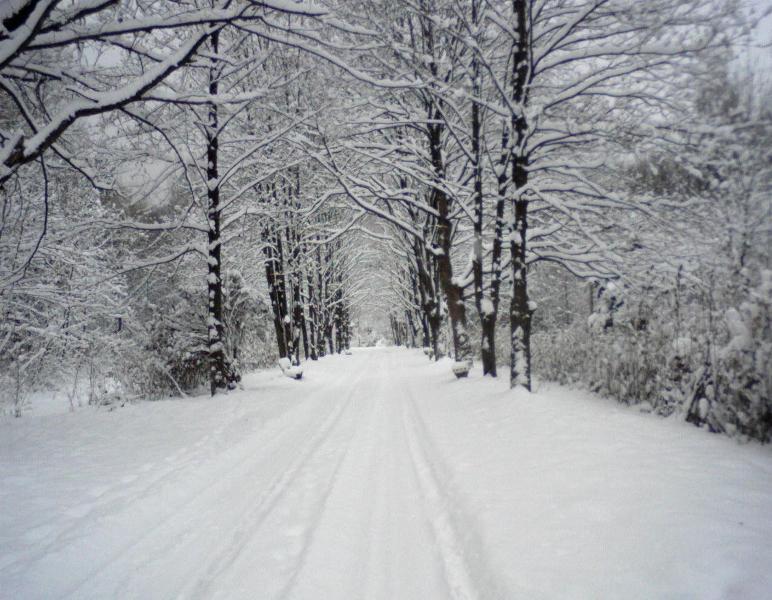 Echinocţiul de primăvară sub zăpadă