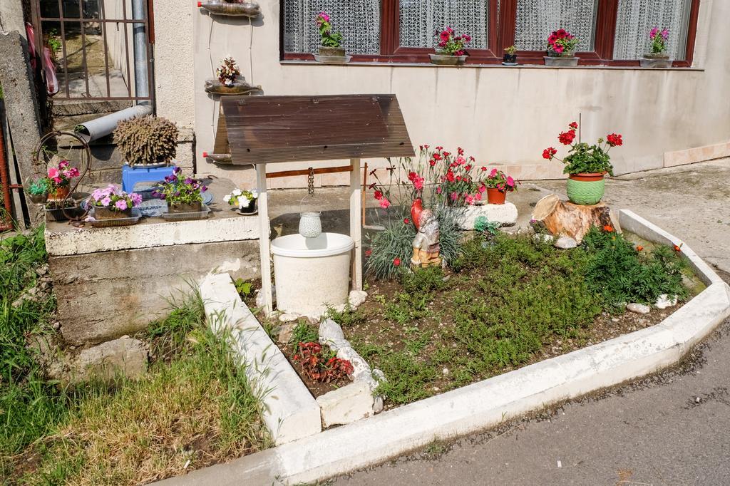 Oameni cărora le pasă: o zălăuancă și-a creat o mică oază de frumos în fața blocului