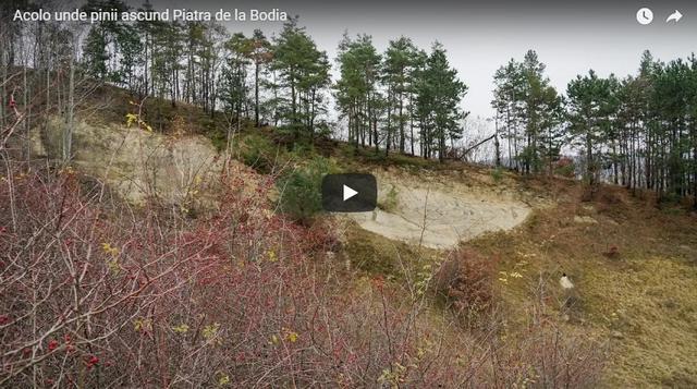 Acolo unde pinii ascund Piatra de la Bodia. Doi oameni și un câine împărțind frățește: un deal mie, un deal ție