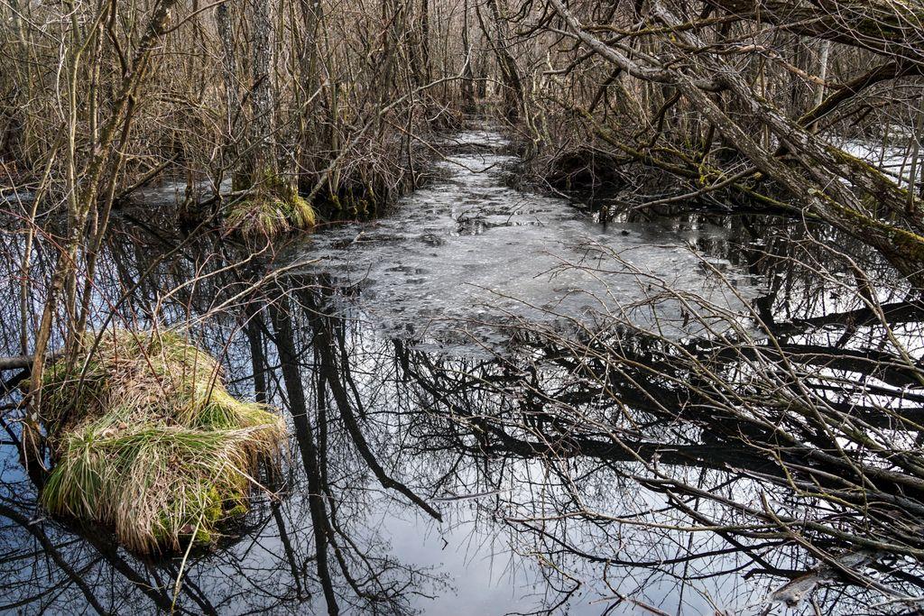 Mlaștina de la Iaz oglindește în negrul apei tot ce o înconjoară. O zi de Făurar cu tanti Ileana