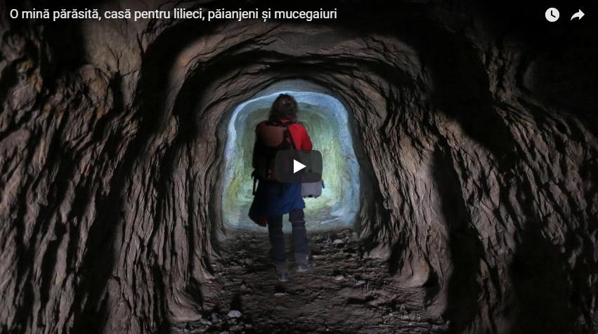 O mină părăsită, cu un tunel orizontal și altul vertical, casă pentru lilieci, păianjeni și mucegaiuri