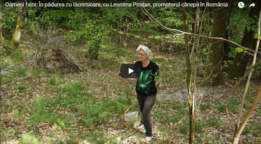 Oameni faini: În pădurea cu lăcrimioare, cu Leontina Prodan, promotorul cânepii în România