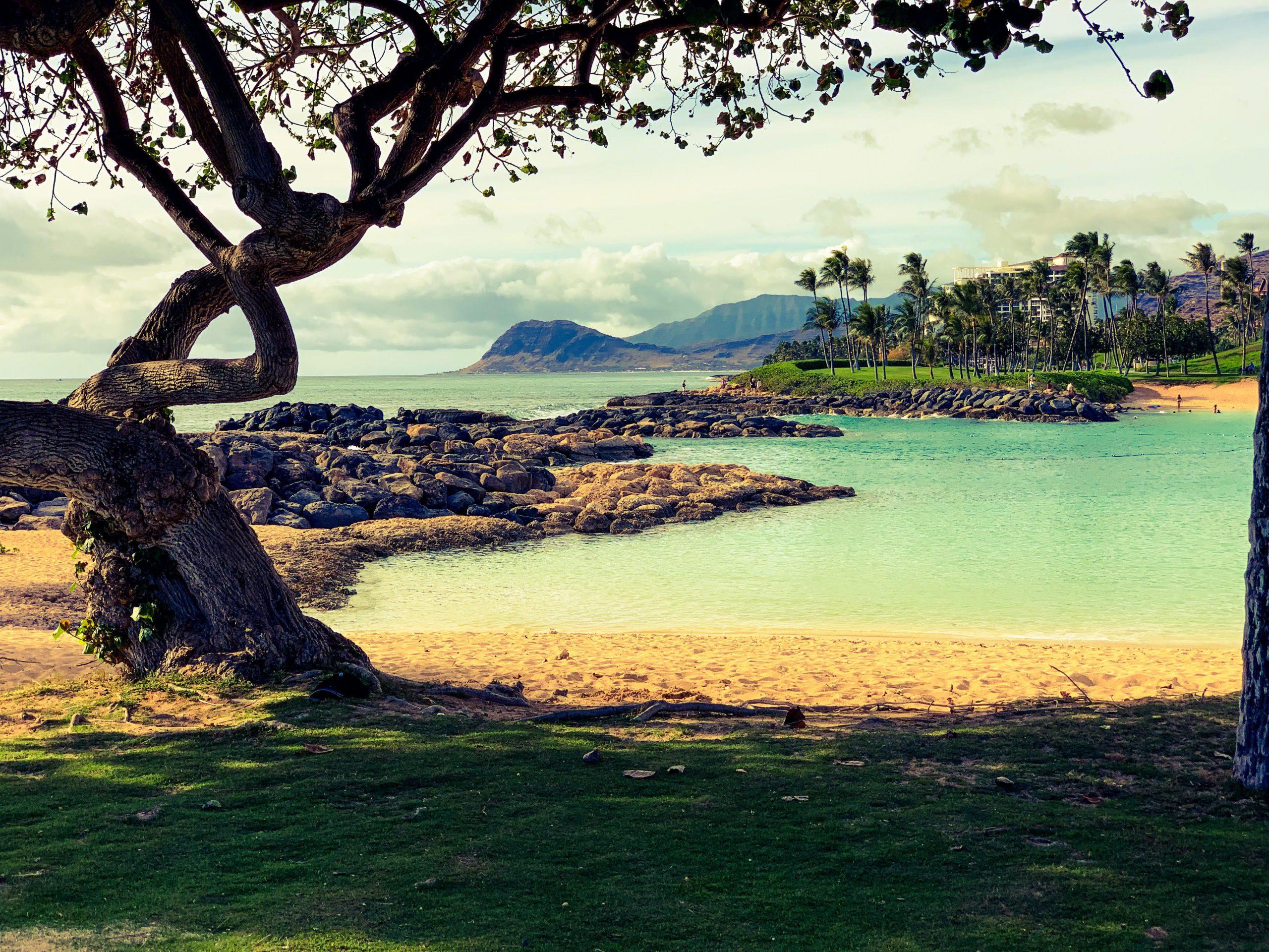 """Lavinia Jula, o zălăuancă stabilită cu familia în Honolulu: """"Chiar și în Hawaii, oriunde privești, peste tot ești întâmpinat în această perioadă de lumina Crăciunului"""""""