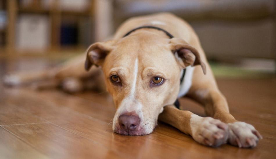 Subvenții pentru sterilizarea câinilor cu stăpân de pe raza municipiului Zalău