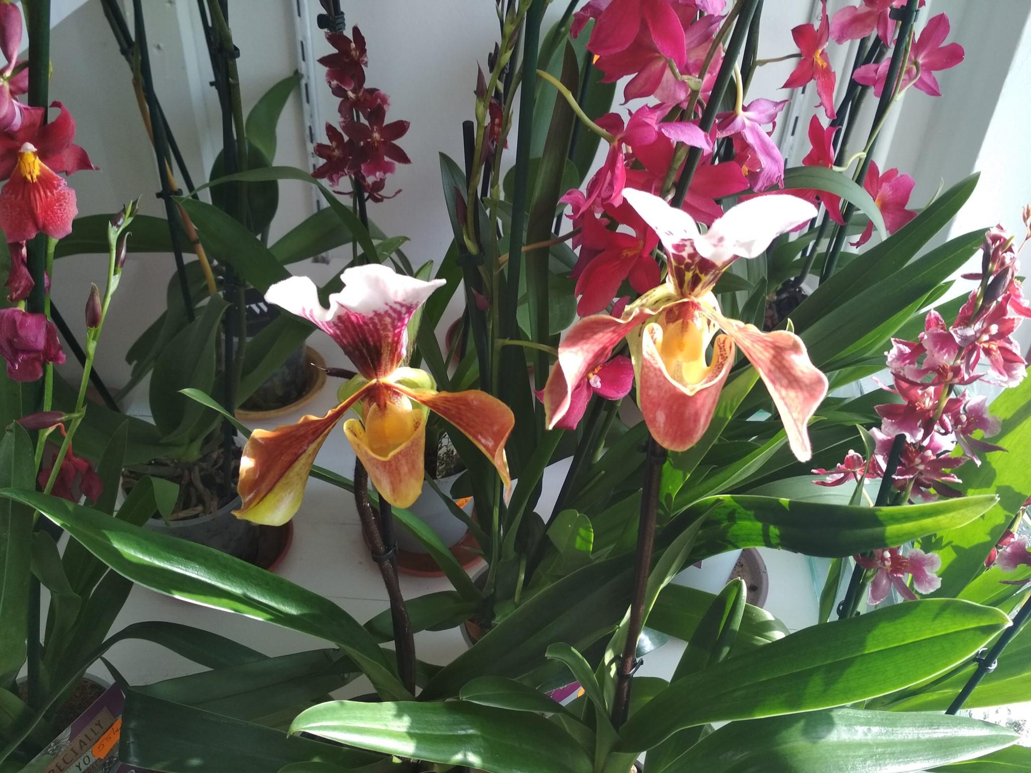 Flori, la prețuri de producător, de la Grădina Botanică Jibou