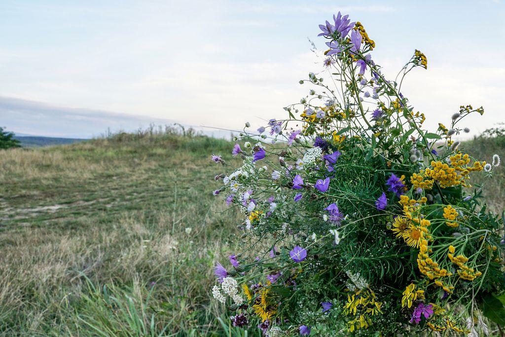 Flori pe Măgura Șimleului