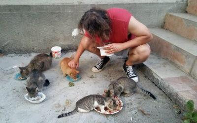 Pisicile de la bloc: Porto, un pisoi sălbatic, dar atât de afectuos. Ce nu au oamenii de nu știu să fie la fel de sinceri ca animalele?