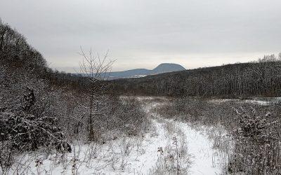 Peisaj în alb. Iarna pădurii de la margine de drum, undeva în Sălaj