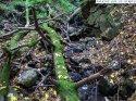 cascada_sipot_halmasd__9_