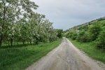 dealurile_verzi_de_langa_satul_trestia_salaj__11_
