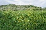 dealurile_verzi_de_langa_satul_trestia_salaj__14_