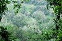 dealurile_verzi_de_langa_satul_trestia_salaj__21_