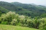 dealurile_verzi_de_langa_satul_trestia_salaj__23_