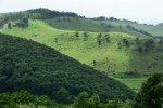 dealurile_verzi_de_langa_satul_trestia_salaj__25_
