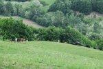 dealurile_verzi_de_langa_satul_trestia_salaj__34_