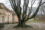 castelul_degenfeld_hodod___4_