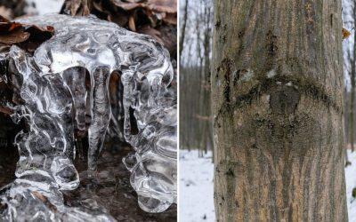 Sculpturile de gheață ale unei mici ape curgătoare. Ochiul pădurii
